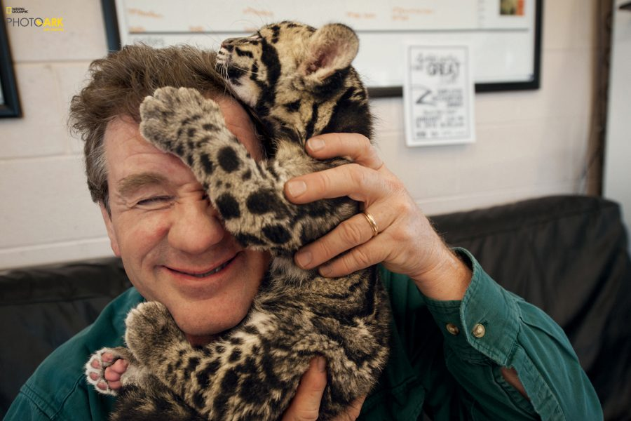 Grahm S. Jones, Columbus Zoo and Aquarium After a photo shoot at the Columbus Zoo in Ohio, a clouded leopard cub climbs on Sartore's head. The leopards, which live in Asian tropical forests, are illegally hunted for their spotted pelts.  © Photo by Joel Sartore/National Geographic Photo Ark