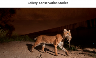 Gallery: Conservation Stories