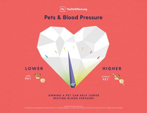 Pets & Blood Pressure