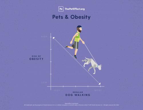 Pets & Obesity
